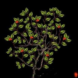 berry_bush_01.png
