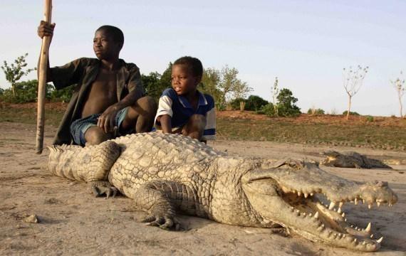 paga-crocodile-pond-a2972333-9370-4a63-9184-670495e151b-resize-750.jpeg.475a0ce5b0723c7157f552d8ffccbad4.jpeg
