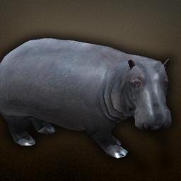fauna_hippopotamus.png.0af8585d0df589486ee4b62c45078794.png