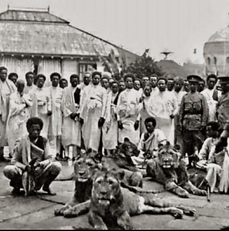 Haile Selassie's pet lions Ethiopia Abyssinia Africa trained on leash chain pre-colonial.jpg