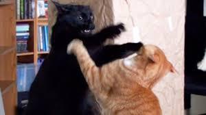 fight.jpg.13bc63238df19d56c4643324b94c433b.jpg