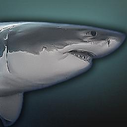 fauna_shark.png