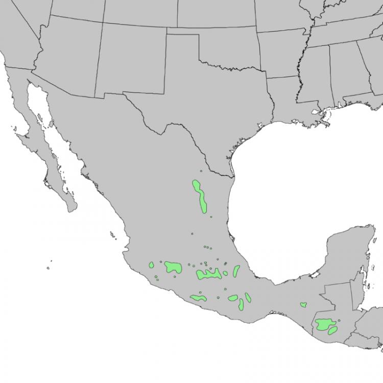 800px-Pinus_montezumae_range_map_1.thumb.png.b710f2decf203361cfb0c7f76efe0588.png