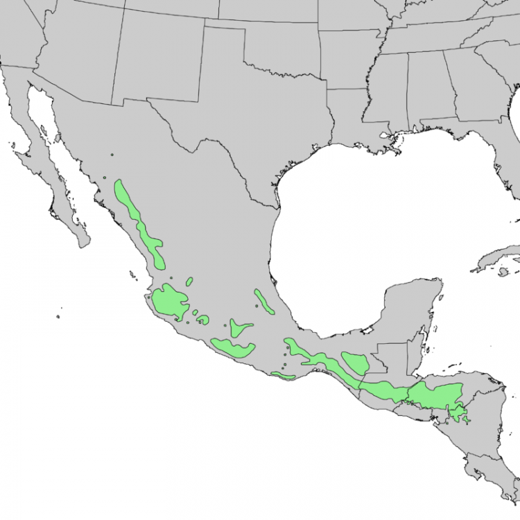800px-Pinus_oocarpa_range_map_1.thumb.png.59b51e6a2b8257ab92a80306c7389874.png