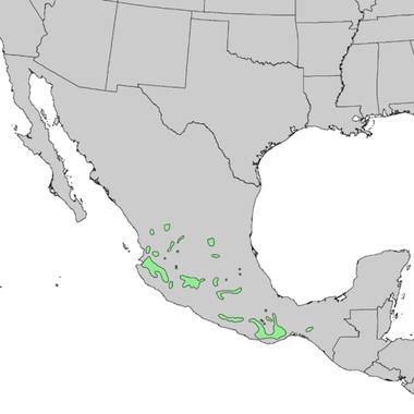 500px-Pinus_devoniana_range_map_1.png